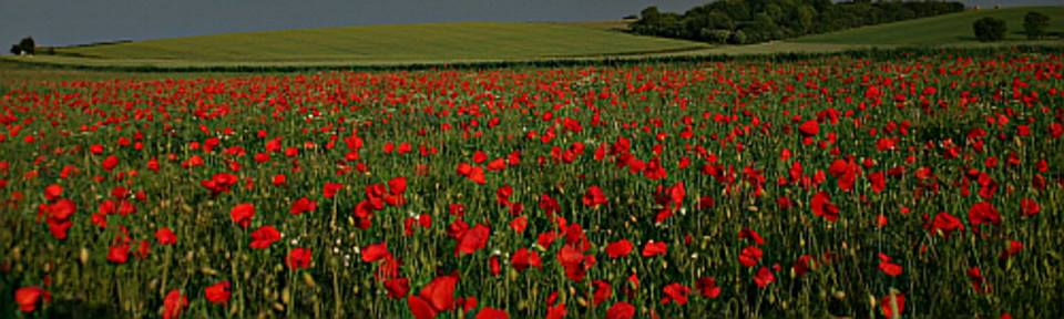 Somme remembrance
